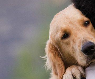 Te romperá el corazón: esto es lo que hacen las mascotas antes de morir