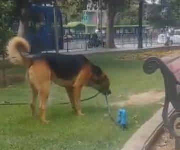 Vídeo de tres perros intentando tomar agua se vuelve viral
