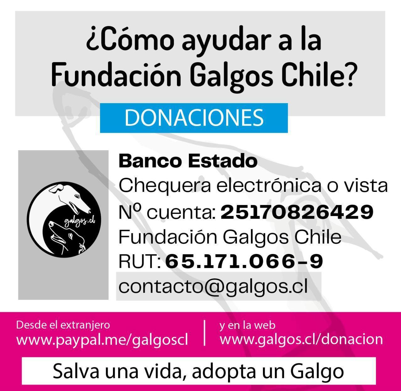 Galgos Chile